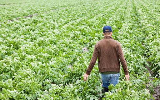 """MIPAAF: """"LE IMPRESE AGRICOLE RIENTRANO NEL DECRETO LIQUIDITÀ"""""""